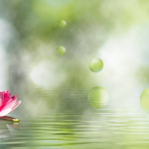 image of lotus flower on the water close-up